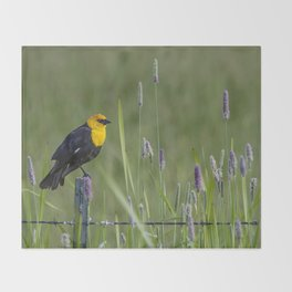 Yellow-Headed Blackbird, No. 1 Throw Blanket