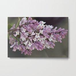 Love Lilac Metal Print