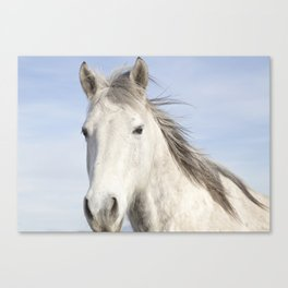 Whit Horse in Color Canvas Print