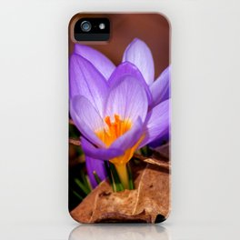 Concept nature : Et purpura claritate iPhone Case