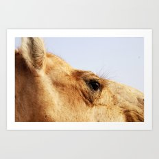 Ready for my close up #2 Art Print