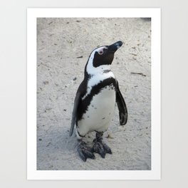Little African Penguin Art Print