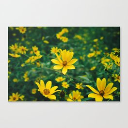 Autumn Flowers (Raleigh, NC) Canvas Print