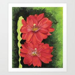 Cactus red flower blooming in Spring Art Print