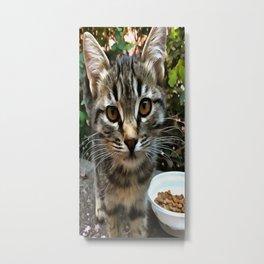 Tabby Cat Kitten Making Eye Contact Metal Print