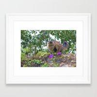 sasha grey Framed Art Prints featuring Sasha by Debbie Maike Photography