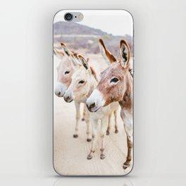 Three Donkeys in Baja, Mexico iPhone Skin
