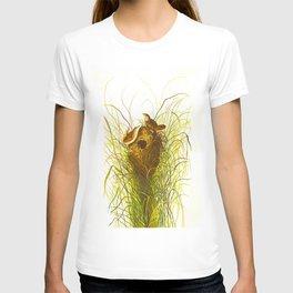 Nuttall's lesser-marsh Wren T-shirt