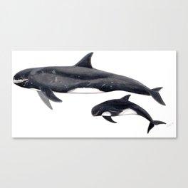 Pygmy killer whale Canvas Print