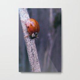 Macro ladybug Metal Print