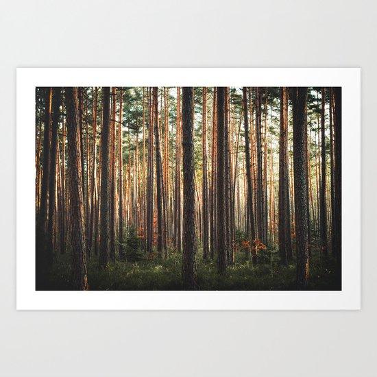 Through The Wood Art Print
