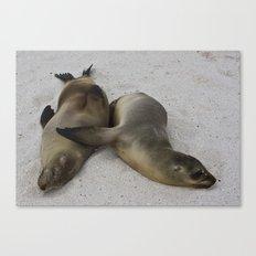 Galápagos Sea Lions Canvas Print