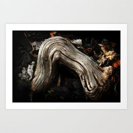 Decay and New Life Art Print