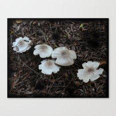Beautiful Mushrooms Canvas Print