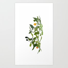 Habañero World Art Print