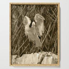Sacred Ibis Benidorm Tint 2 Serving Tray