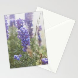 Lupine Morning - Flower Photography Stationery Cards
