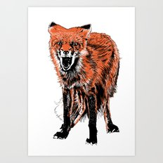 Angry Fox (color) Art Print