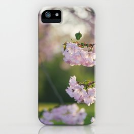 Cherry Tree Gorgeousness iPhone Case