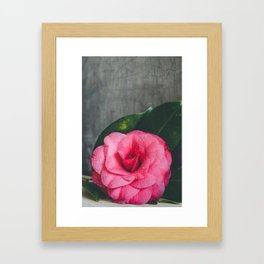 Camellia Framed Art Print