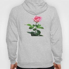 Pink Rose in Bloom Hoody