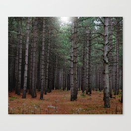 Endless Pines Canvas Print