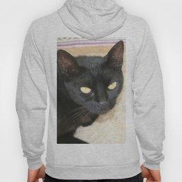 Beautiful Black Cat Portrait  Hoody