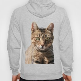 Portrait Of A Cute Tabby Cat With Direct Eye Contact Isolated Hoody