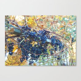 Truro Grapes Canvas Print