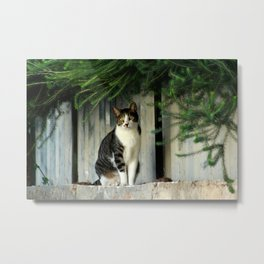 Cat thinking about her next move Metal Print