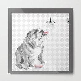 Bulldog taking a shower Metal Print