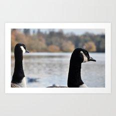 Geese outlook Art Print