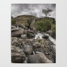 Tree in Snowdonia Poster
