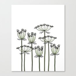 wild carrots Canvas Print