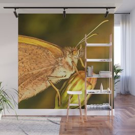 Meadow Brown Beautiful Butterfly Portrait Wall Mural