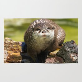 Otter on A Tree Trunk Rug