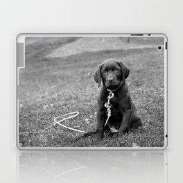 B&W Puppy Laptop & iPad Skin