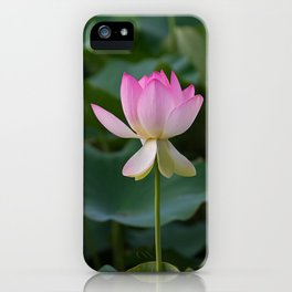 water lily #society6 #decor #buyart iPhone Case