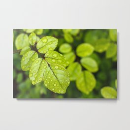 Plant Patterns - Green Scene Metal Print