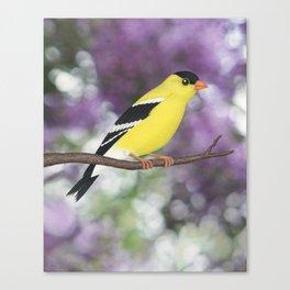 American goldfinch male bokeh Canvas Print
