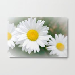 Daisies flowers in painting style 1 Metal Print