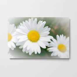Daisies flowers in painting style 1 Metal Print
