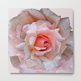 Blush rose with textured blossoms Metal Print