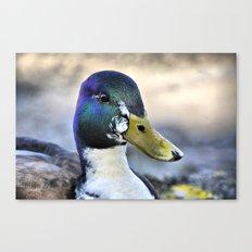 Duck Canvas Print
