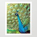 The Peacock. © J&S Montague. by outofthemists