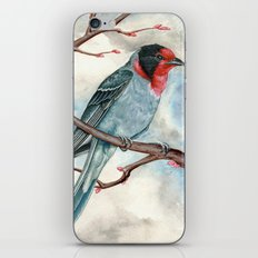 Red Faced Warbler iPhone & iPod Skin