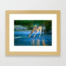 First drink of the morning Framed Art Print