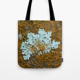 Orange and green moss in tree bark Tote Bag