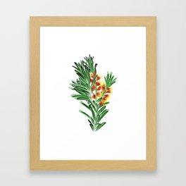 Beautiful Australian Native Bottlebrush Flower Framed Art Print