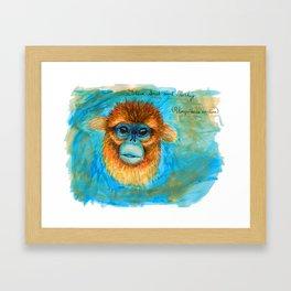 Golden Snub Nosed Monkey Framed Art Print